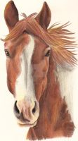 Horse Drawing 1 by Lozi94