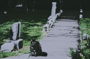 Cat in a graveyard (Picasa effect) by Rangerbaldwin
