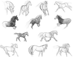 Horse Studies 1 by ChayaA