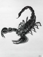 Scorpion tattoo drawing by Kelsey-Anne