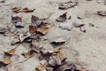 Leaf Stains 4 by softmist93