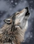 .::cold howl::. by flame1111