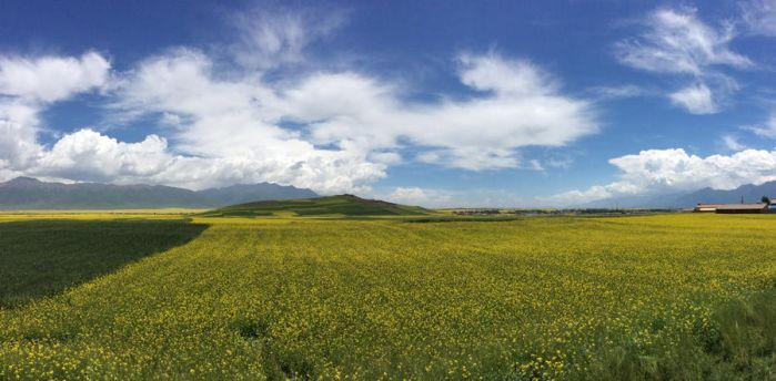 Field of Gold by rm5