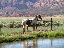 Horses 285 .:Stock:. by WesternStock