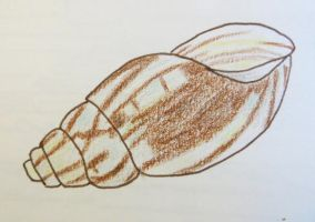 Giant African Snail Shell by Toadinthegarden