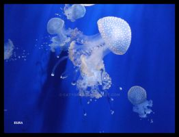Jellyfish acquario di genova by catygraf