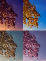 colors of autum by avireX