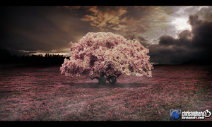 Cherry Blossom Tree 2 by Christophere13