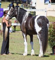 STOCK - Canungra Show 2012 105 by fillyrox
