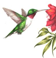 Hummingbird by JoyMason