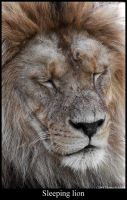 Sleeping lion by Mathness