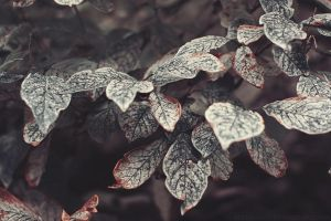 fading leaves by Altingfest