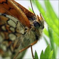 Papillon . by pourquoipas