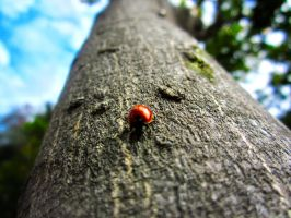 Lady Bug on a Tree by sultanalamkhan