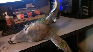 Whitetail fawn doe, WIP3 by psychische