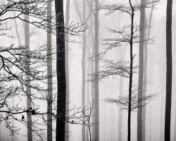 A Strip of Trees 03 by HorstSchmier