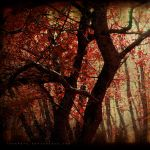 Autumn Sonet by Whimsical-Dreams