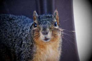Squirrel 6 by candy691977