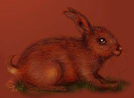 Wild Hare by diva79