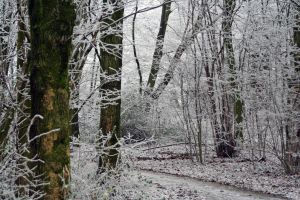 winterland 36 by priesteres-stock