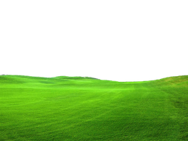 Green Grass PNG FILE - Use freely by TheArtist100