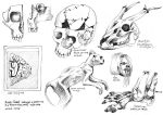 Anatomy Museum Sketches by Kehmy