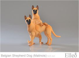 Malinois 03 by leo3dmodels
