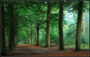 When Baarn forest was green by jchanders