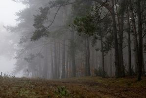 fog in the forest by Su58