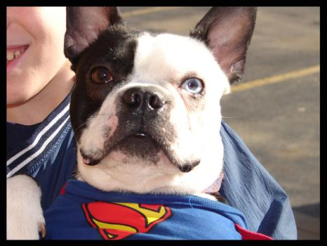 Super dog by fryg