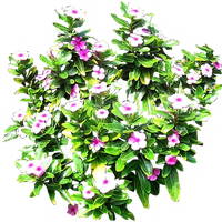 Pink Periwinkle shrub by LilipilySpirit