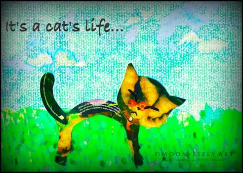 It's a cat's life... by Moon-Lilly