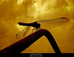 Dragonfly by ipawluk