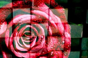 Rose Puzzle by lgwildwomanofthenort