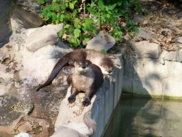 Otters 1 by Angeloflifelight