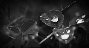 Tears of life. by Lapapunk