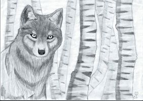 ~Realistic Wolf~From Reference~ by Squiidge