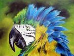 Parrot by Tomek3618