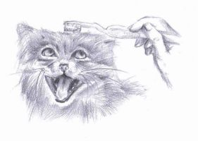 Pallas Cat smiling at toothbrush by x-Musty-x