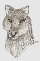 Timber Wolf by DelJakar