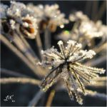 Angelica's Chrystals by JoannaMoory