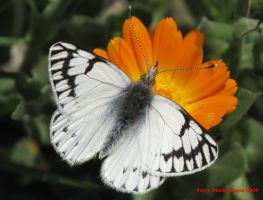 Butterfly from Peru by Terrydunk