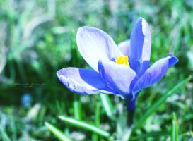 Spring is coming by Ishilla