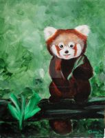 Red Panda by narniamushroom02