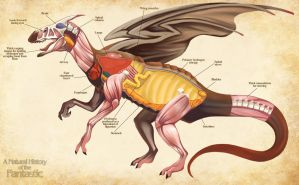 Dragon Anatomy- A Natural History of the Fantastic by Christopher-Stoll