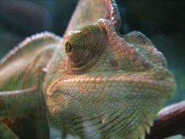 Cameleon's Face by poiuytre00750