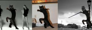 Photoshop Battles (Dancing Cat) by Kungfu-ad