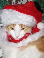 Christmas cat 2 by MorbidMorticia