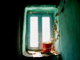 window 2 by Qauches