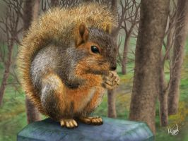 Squirrel in the forest by Berilia